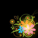 Black background with bright colorful flowers Royalty Free Stock Images