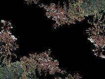 Black Background with Campanula Latifolia Flowers Borders