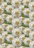 Black  background with large white roses Stock Photos