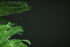 Black background with leaves Royalty Free Stock Photo
