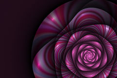 Black background with pink rose. Flower texture, fractal pattern. Marsala striped digital flower on purple backdrop Royalty Free Stock Photo