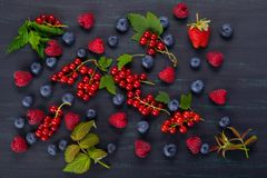 Black background with a set of red and blue berries with green leaves Royalty Free Stock Photos