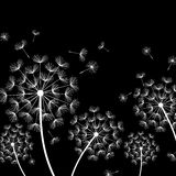 Black background with stylized white dandelions Royalty Free Stock Photography