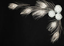 Black Background With White Ranunculus Flowers And Feathers Stock Photos
