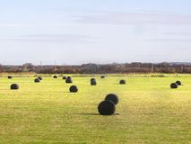 Black bales of straw hay on a field in liverpool Royalty Free Stock Photos