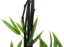 Black Bamboo Stock Photo