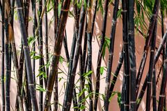 Black bamboo background in the graden.  royalty free stock images