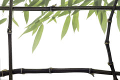 Black  Bamboo Frame with leaves Royalty Free Stock Photography