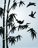 Black bamboo and small birds Stock Image