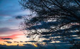 Black bare tree branches over sky Royalty Free Stock Photography