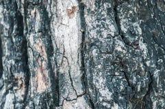 ฺBark tree texture background. Black bark tree texture background Stock Image