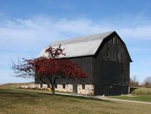 Black barn. With stone foundtion apples on the tree against blue sky Royalty Free Stock Photo