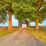 Black Barn with Big Trees. Black Barn with Big Oak Trees royalty free stock photo