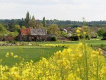 The Black Barn 16th Century, Woodoaks Farm, Maple Cross, Hertfordshire with foreground of blurred yellow flowering kale royalty free stock image