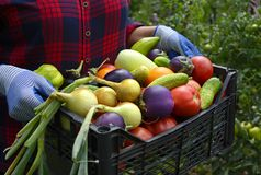 Free Black Basket With Tomatoes, Cucumbers, Eggplant, Onions And Other Vegetables In Hands On The Background Of The Garden Stock Photography - 166170182