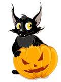 Black bat and Halloween pumpkin Stock Photography