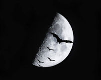 Black bats flying in the sky at night. Royalty Free Stock Photos