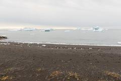 Black beach and icebergs Royalty Free Stock Image
