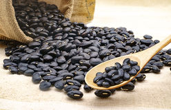 Black bean in the sack  blackground Stock Images
