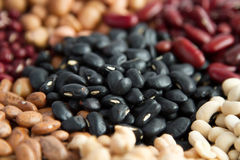 Black bean seed Stock Photography