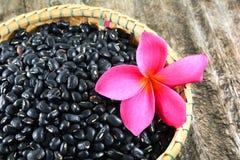 Black beans basket Royalty Free Stock Image
