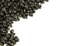 Black Beans isolated. Black Beans isolated on white background Stock Image