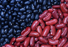 Black Beans and Kidney Beans Stock Images