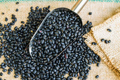 Black beans seeds. In steel spon on sack backgrond Stock Image