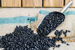Black beans seeds. In steel spon on sack wood backgrond Stock Image