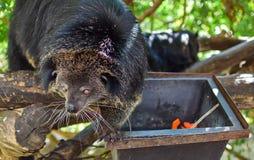 A black bear is climbing the tree royalty free stock photos