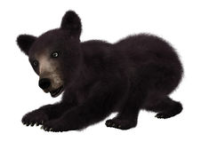 Black Bear Cub. 3D digital render of a black bear cub isolated on white background Royalty Free Stock Image