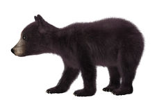 Black Bear Cub. 3D digital render of a black bear cub  on white background Stock Images