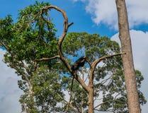 Black Bear in jungle of Borneo stock photo
