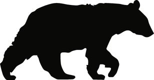 Black Bear Walking. Isolated Vector Art Stock Photography