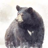 Black Bear watercolor. Black Bear portrait watercolor painting stock illustration