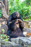 Black bear in zoo Stock Image
