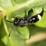 Black bee on nature. close-up. In a park in the nature stock photography