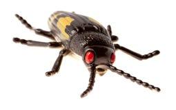 Black beetle Stock Photography