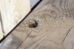 Black Beetle Stock Photos