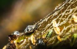 Black beetle closeup Stock Photos