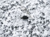 Black beetle crawling on white crystals of salt covering the surface of the dried lake stock photo