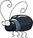Black beetle Royalty Free Stock Images
