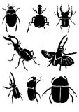 Black beetles Royalty Free Stock Photography