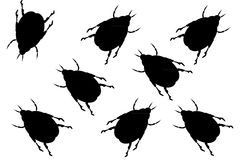 Black beetles. On white background Royalty Free Stock Images