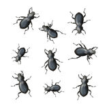 Black Beetles Stock Photography