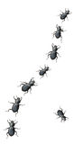 Black Beetles Marching In A Line Royalty Free Stock Photos