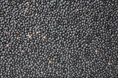 Black Beluga lentils Royalty Free Stock Images