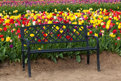 Black Bench with Tulips Stock Photography
