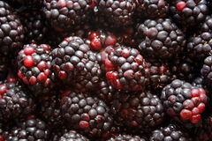 Black berries. Bunch of delicious and nutritious Royalty Free Stock Photos