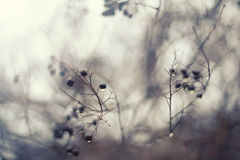 Black berries in fog. Abstract winter background Royalty Free Stock Photos